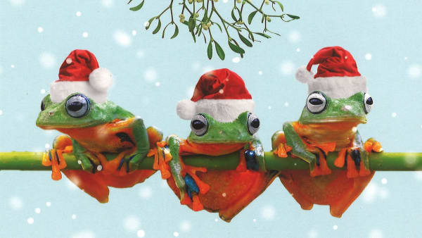 We Three Frogs Christmas Cards
